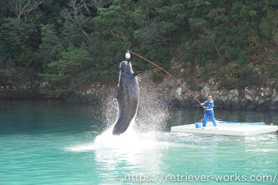 クジラショー