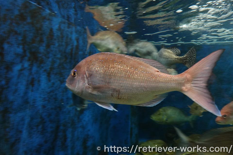 京都大学白浜水族館の展示